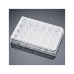 Corning™ BioCoat™ Fibronectin Multiwell Plate, 5/CS