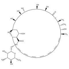 Amphotericin B (Yellow Solution/250μg/mL), Fisher BioReagents