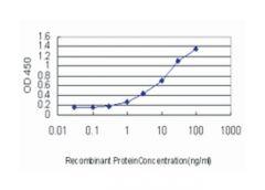 lymphoid enhancer-binding factor 1, Mouse, Clone: 5A3, Abnova™