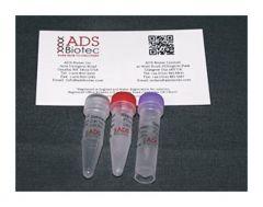 ADS Biotec™ Optimase™ DNA Polymerase