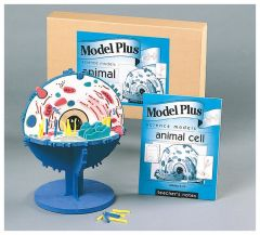 Model Plus Animal Cell