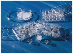 Corning™ Transwell™ Multiple Well Plate with Permeable Polycarbonate Membrane Inserts