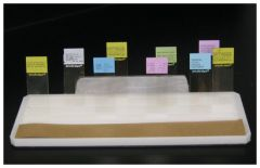 Fisher HealthCare™ Accessories for Tissue Flotation Baths and Flotation Work Stations: Slide Drying Racks