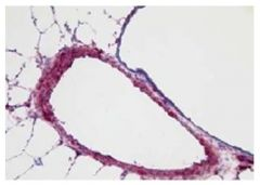Goat Anti-Rabbit IgG (H+L Chain Specific) Secondary Antibodies, SouthernBiotech™