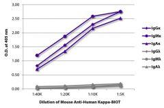 Kappa Mouse anti-Human, Biotin, Clone: SB81a, Southern Biotech™