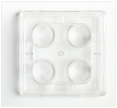 Fisherbrand™ Surface Treated 24-Well Tissue Culture Plates, Flat bottom