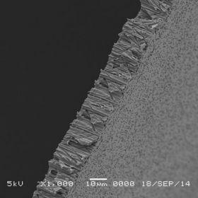 GVS Polycarbonate Track-Etched (PCTE) Membrane Disks